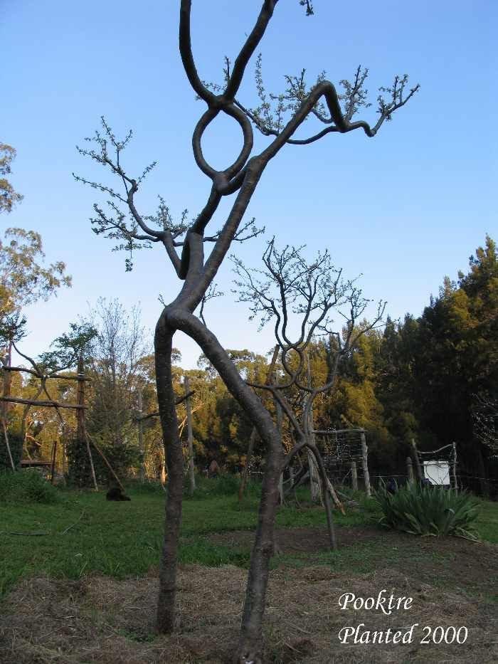 Необычные деревья (45 фото)