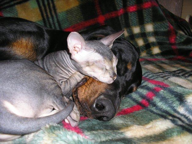 Дружба кота и собаки (9 фото)