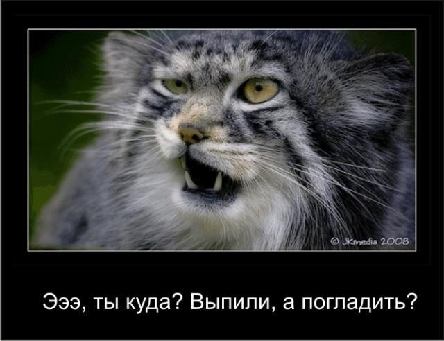 Креатив про котов (13 фото)