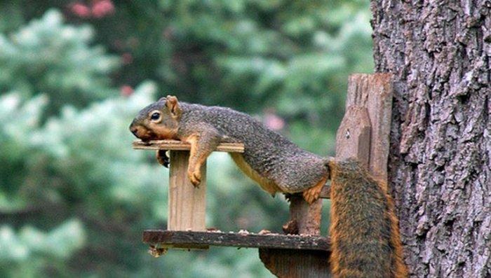 Отдых на дереве (5 фото)