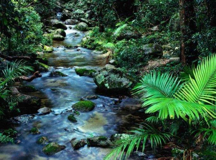 природа2
