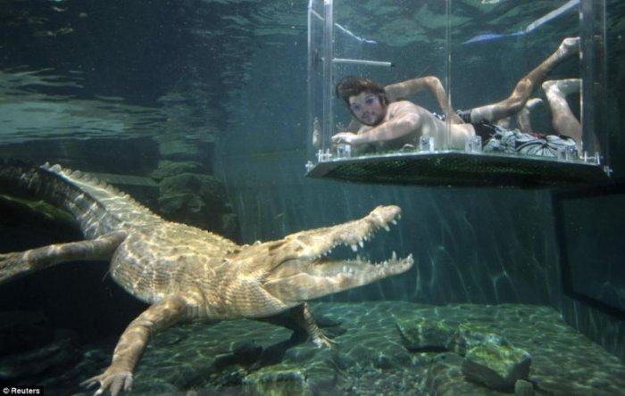 Купание с крокодилом (6 фото)