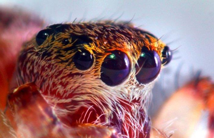 Макрофото насекомых (45 фото)
