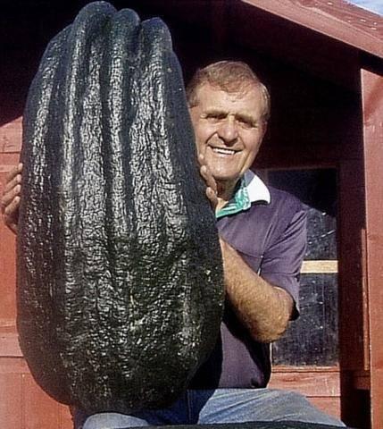 Гигантские овощи (16 фото)