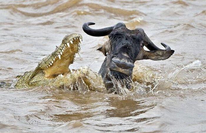 что такое крокодил у рыбаков