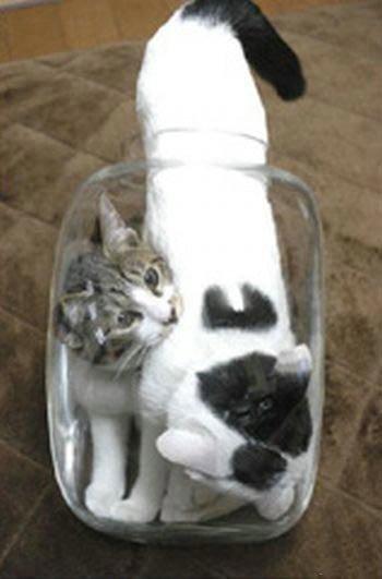 Коты в банке (9 фото)