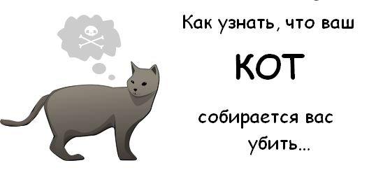 Как узнать, что кот хочет вас убить (10 фото)
