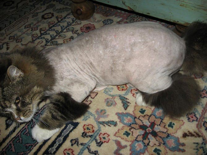 Бедный кошак (4 фото)