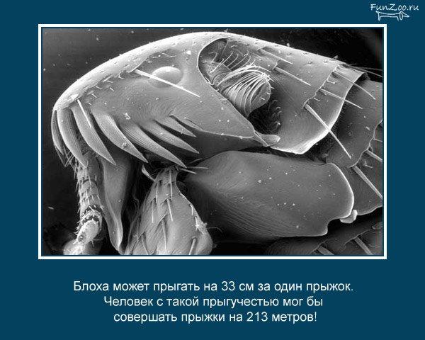 Интересные факты о животных (25 фото)