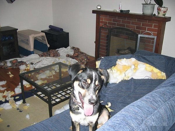 Оставили собачек дома (5 фото)