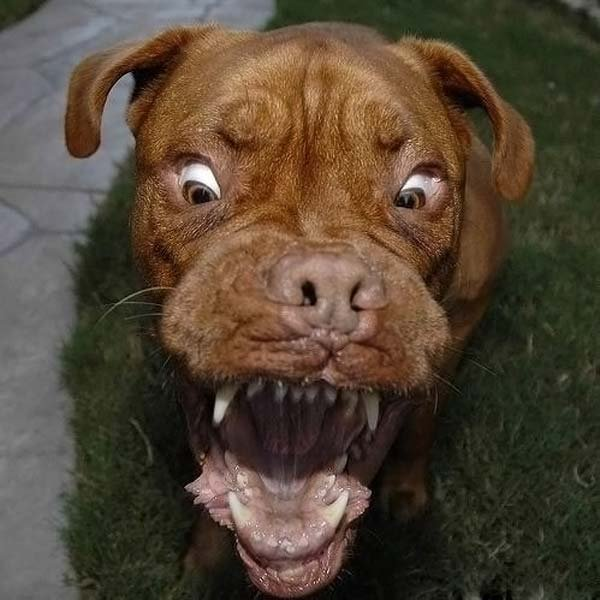 Собака + мяч (13 фото)