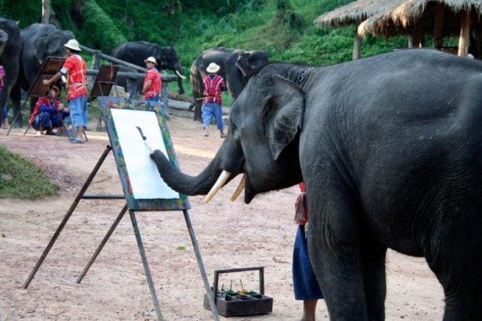 Как рисует слон (7 фото)