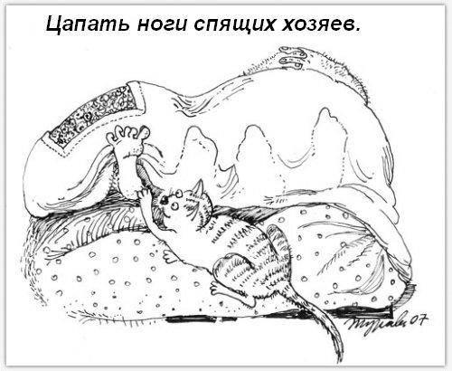 Обязанности кота по дому (18 фото)