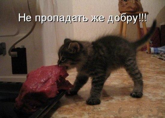 Позитивные животные (21 фото)