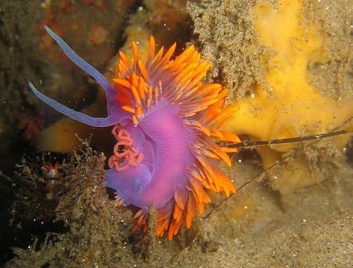 Необычные обитатели океана (20 фото)