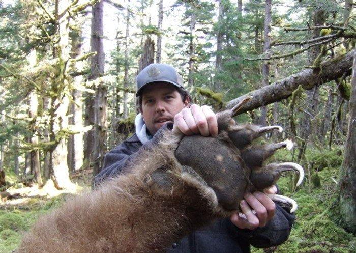 Застрелили медведа (5 фото)