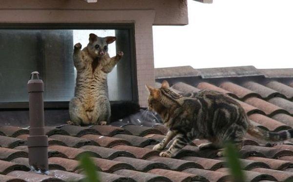 Про котов (9 фото)