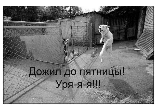 ПЯТНИЦА! (43 фото)