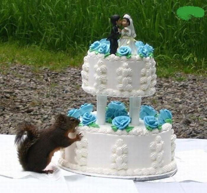 Оставили торт без присмотра (3 фото)