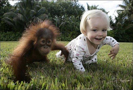 Девочка дружит с маленьким орангутангом (8 фото)