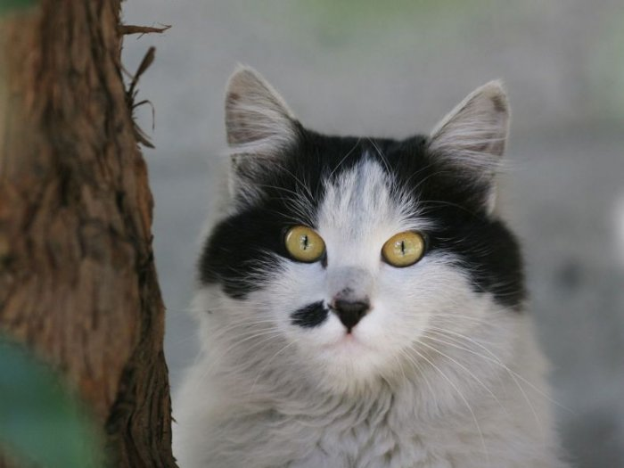 Кошаки (56 фото)