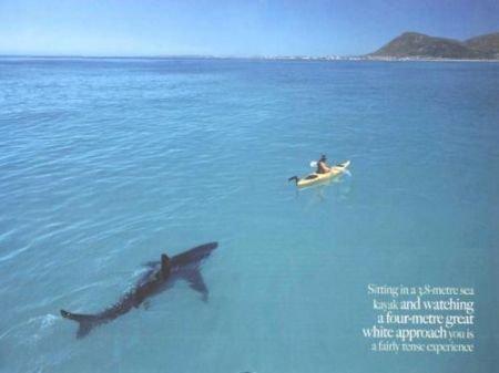 Дружба человека и акулы (6 фото)