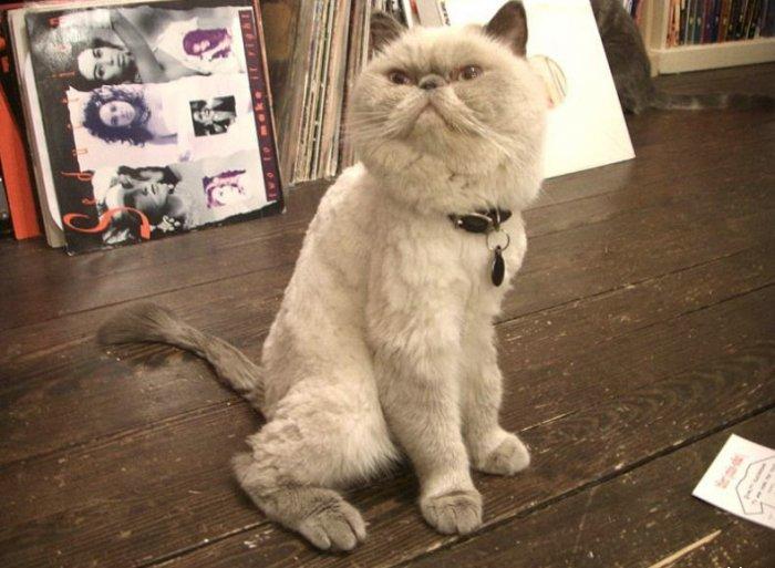Как котика стригли:-) (10 фото)