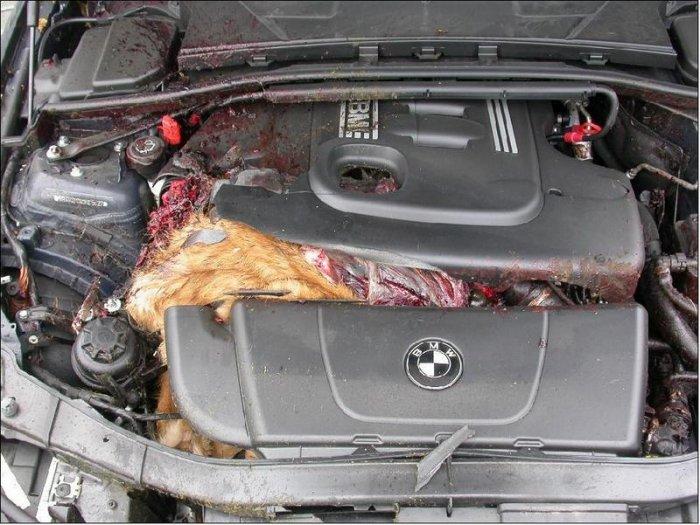 Собака попала под капот. ЖЕСТЬ! (4 фото)