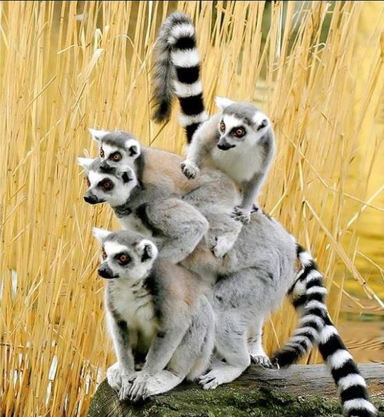 Прикольные фотки животных (20 фото)