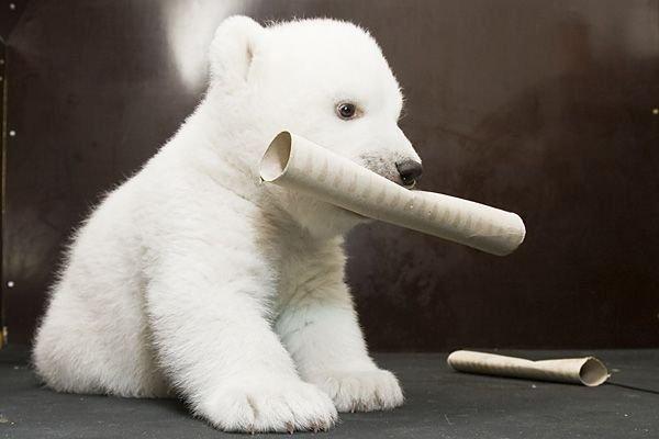Позитив дня! Белый медвежонок Flocke (18 фото)