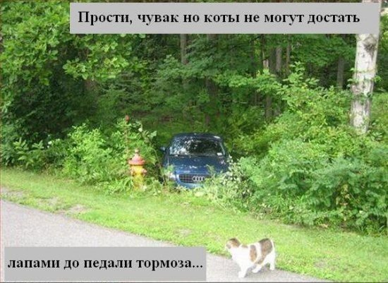 Прикольные фотки животных:-) (12 фото)