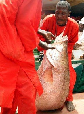 ак ловят рыбку в Нигерии (11 фото)