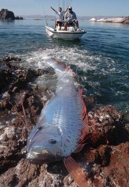 Необычная рыбка (6 фото)