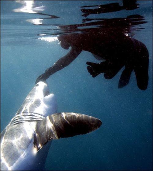 Человек-акула (8 фото)