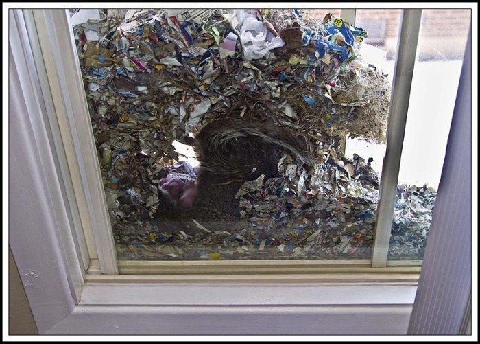 Угадайте что там за стеклом?:-) (10 фото)