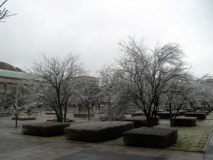 После ледяного дождя! (18 фото)