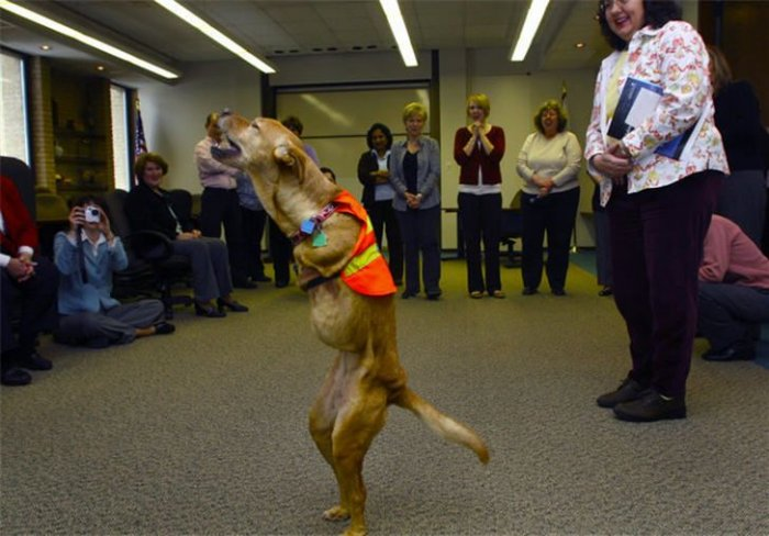 Собака, которая ходит как человек (15 фото+видео)