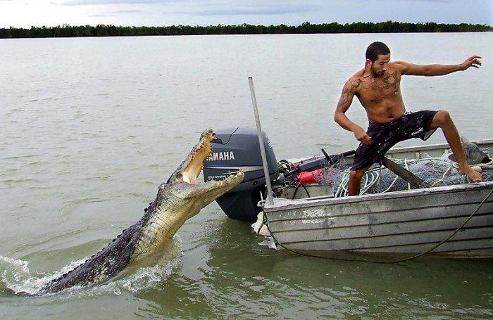 С крокодилом лучше не шутить (3 фото)