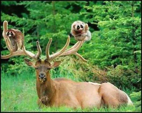 Классные фотки животных! (17 фото)