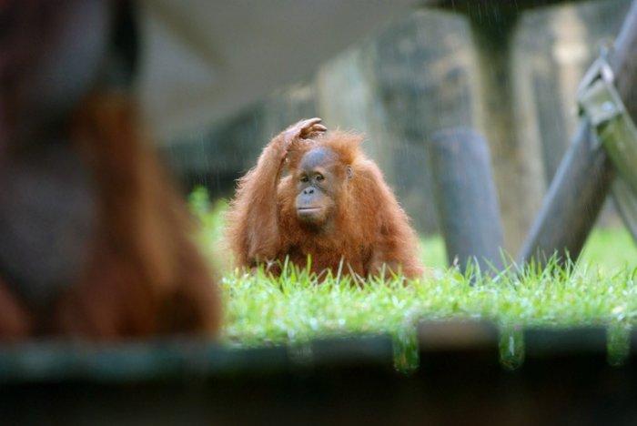Прикольные обезьянки! (18 фото)