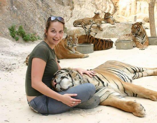 Ручные тигры в Тайланде (13 фото)