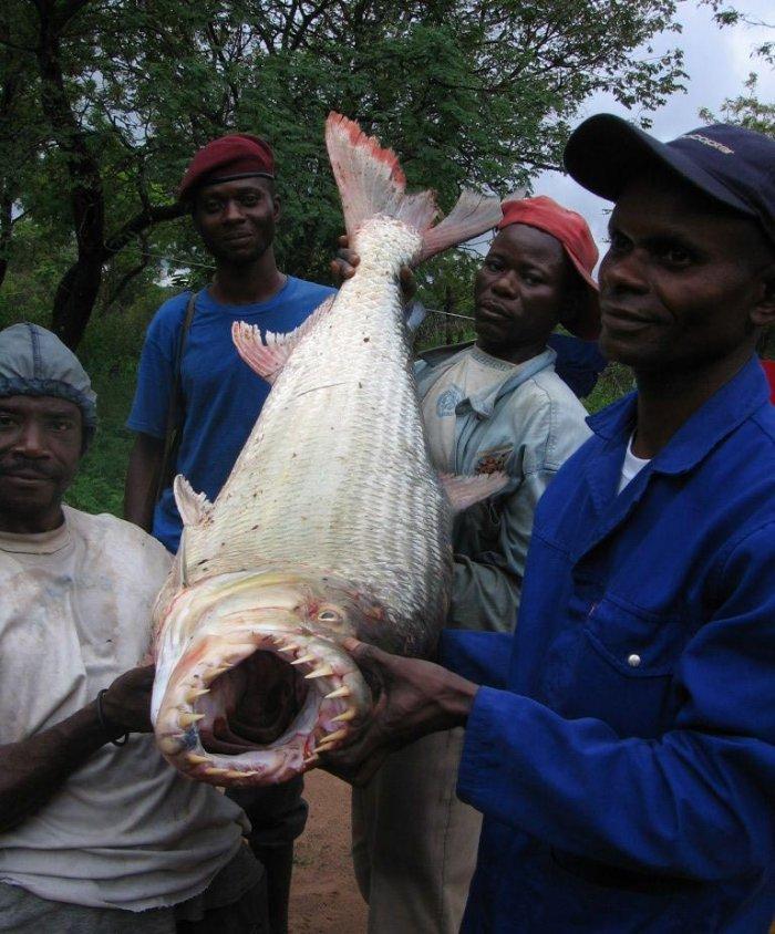 Стремная рыбка! (6 фото)