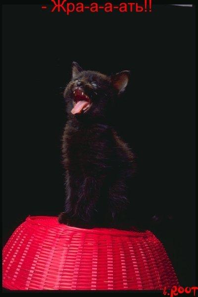 Прикольные фотки котов с подписями:-) (35 фото)
