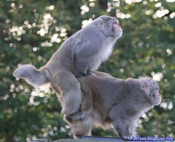 Животные тоже делают это:-) (58 фото)