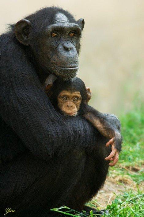 Животный мир (31 фото)
