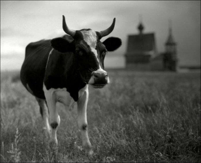 Русский дух (76 фото)