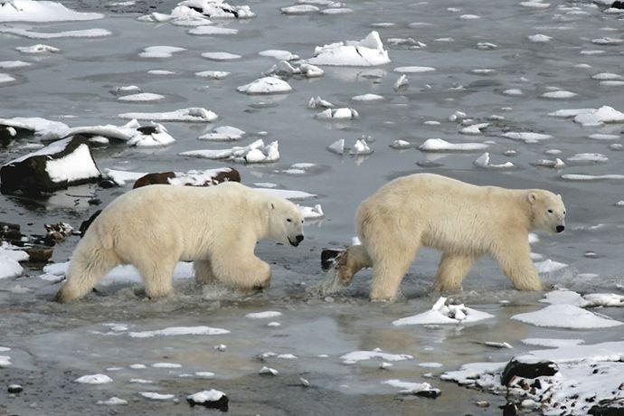 Лучшие фото фикой природы 2008 года (39 фото)