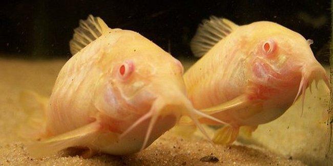 Животные-альбиносы (20 фото)