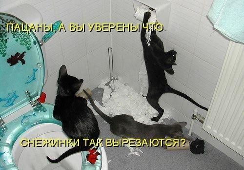 Прикольные фотки животных с подписями (43 фото)