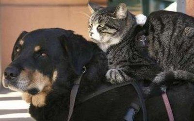 Животные дружат (22 фото)